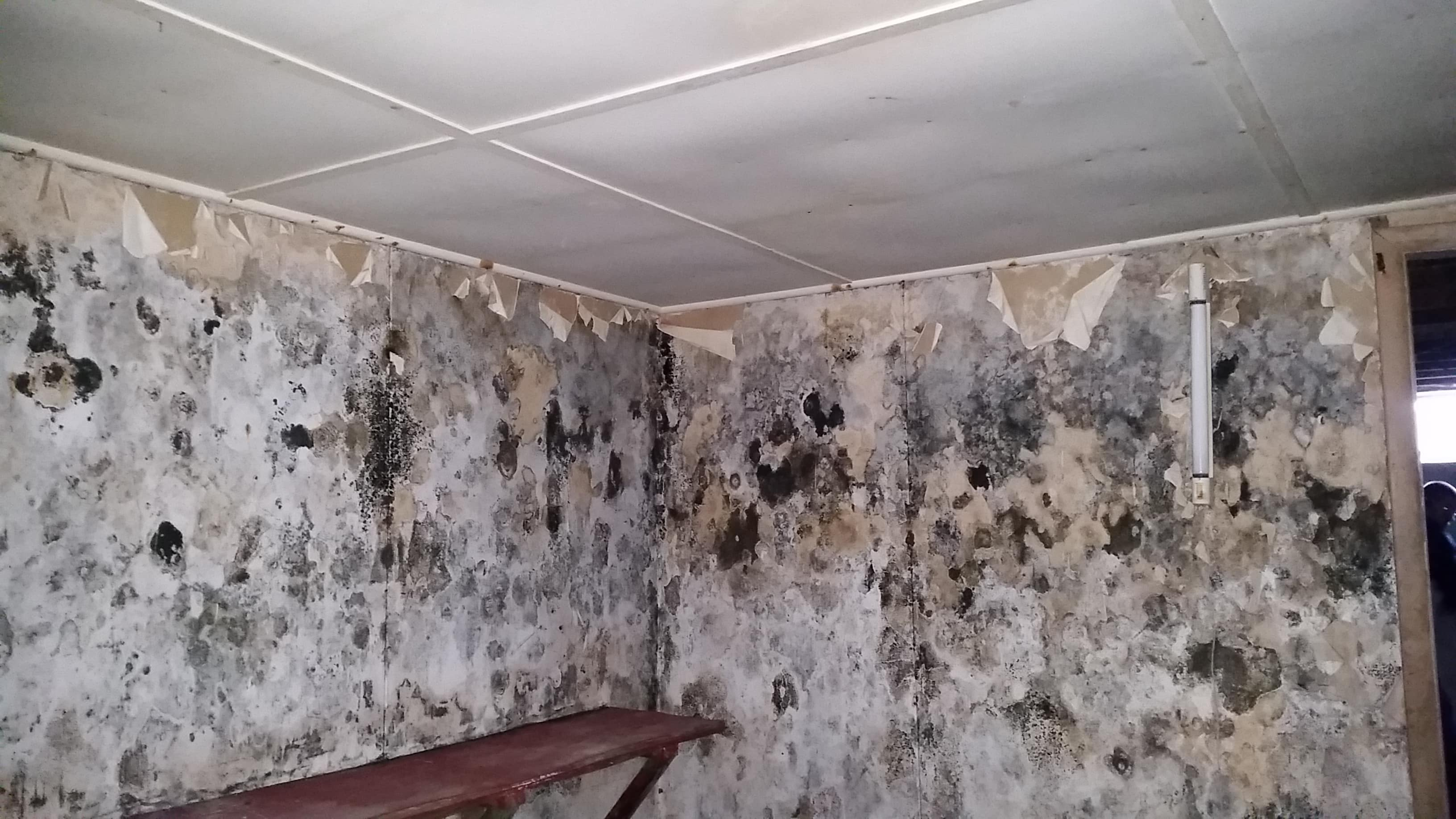 Mold Removal & Remediation Peak Construction