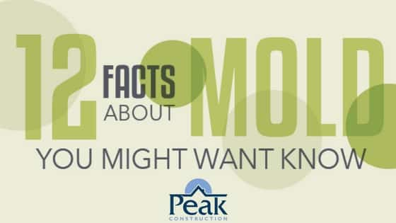 Mold Awareness | Peak Construction