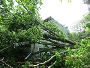 Tornado Tree Strike - Wappinger Falls