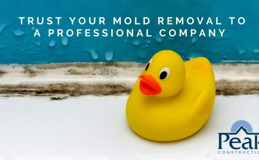 Mold Experts in Hudson Valley