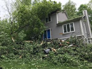 Fishkill, NY Tree Strike Restoration